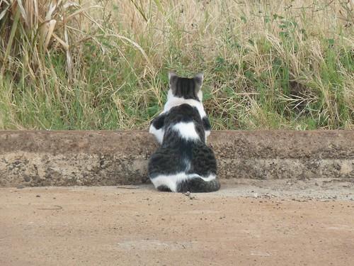 Chilling Cat