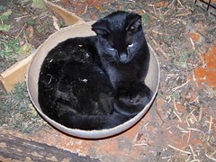 Bowl of kitty