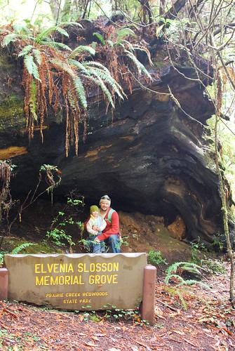 redwood2-0289
