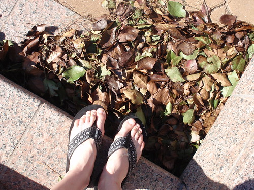 Leaves and Flops