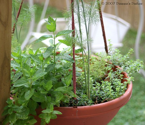 Hanging Herb Pot