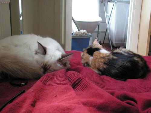 Iris och Lilly