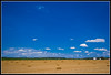 field study 6 (fensterbme) Tags: sky 20d field clouds rural interestingness personal farm harvest wideangle bluesky hay bales haybales canon1022mm ultrawideangle breathefestival joshuahouse fensterbme bigbluesky i500 interestingness439 canon1022mmf3545efs ultrawidelens fenstermacherphotography studyofhaybales explore17jul07
