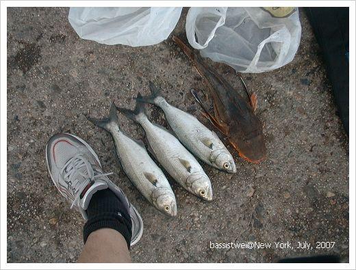 fish 006 s
