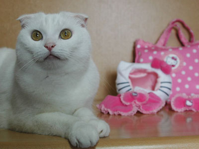 cat in hello kitty costume. The Hello Kitty Costume For Cats