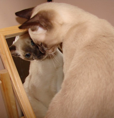 Narcissistic Kitty