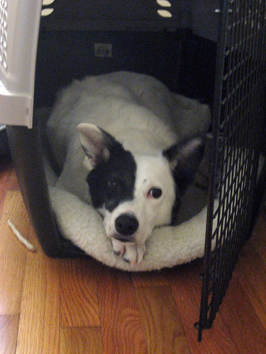 panda loves her crate.jpg
