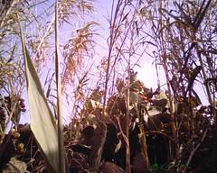 Cactus & Roseaux