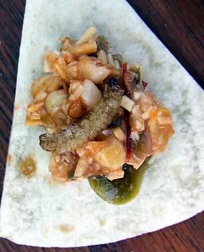 wax moth bean dip
