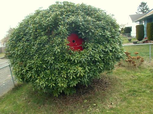 DIY Belly-button Bush Birdhouse!