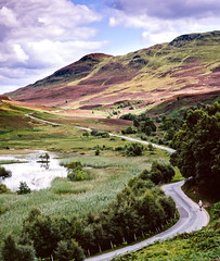 Walking The Dog (Lyonheart) Tags: road dog flower film walking scotland fuji purple walk heather perthshire highland velvia 4x5 5x4 bllom