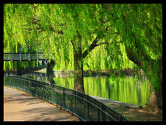 Just a fantasy (Gary*) Tags: park bridge sunlight green nature water bravo searchthebest shade willows orton supershot magicdonkey flickrsbest lovephotography speclandscape superaplus aplusphoto supergary oufstandingshot explore1st