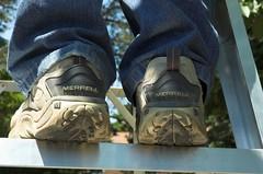 Cherry picker's shoes (richard.siemens) Tags: summer cherry backyard cherries shoes merrell