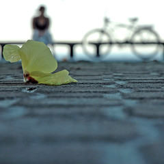 A moça, a bike e a flor (Paula Marina) Tags: brazil flower bike brasil bravo 4x4 song flor bicicleta sidewalk música guarujá pitangueiras calçada quadrada canção todosetransforma dochão otítuloébossanovatotalmesmo jdfoiinjustiçadonooscarqdoganhoupelatrilhadediáriosdamotocicletacomalotroladodorio fizestafotonodiaemqueestreieiminhad70 achoquefoiumbomcomeçod gostodelaquadrada gostodefotosquadradas setivessesidofeitacomumagrandeformatoseriaassim fiqueisentadanomeiodaruaparaclicarenquantooscarrospassavam tudoporumaboafoto euachoestaumaótimafoto amojd umdosmelhoresdomundo queriaseramigadele eouvilocantarbembaixinhorsrsrsr napraiadepitangueiras meapaixoneiporelealiqdosubiuparareceberoprêmioenãodissenadasócantouumtrechodamúsicacomtodaclasse erecebeuooscardasmãosdeprince naépocaaindaerachamadocomoaquelequesechamavaprince paulamarina©