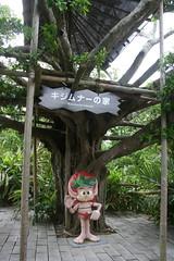 IMG_2855.JPG (drapelyk) Tags: okinawa ryukyumura kijimuna