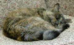 Sleeping+facing+right+-+small