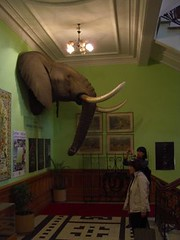 durban natural history museum - foyer2