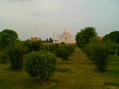 Taj Mahal - From Mehtab Bagh-2