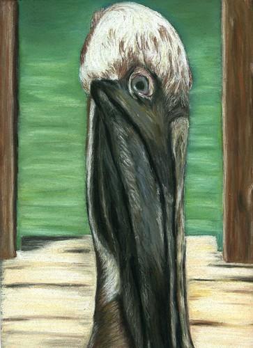 pelican029