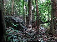 Rainforest at Lake Placid - Cairns Australia (emblatame (Ron)) Tags: trees rainforest australia queensland cairns smithfield lakeplacid peopleschoice barronriver naturesfinest australiannatives outstandingshots rainforestplants firsttheearth bestofaustralia rainforesttrees