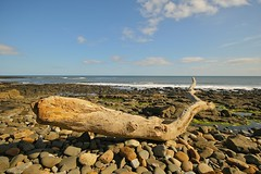 Driftwood (Nala Rewop) Tags: coast driftwood northeast aplusphoto