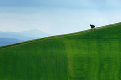 Tilted (Philipp Klinger Photography) Tags: trip travel italien light shadow vacation sky italy mountain holiday mountains tree green nature clouds landscape spring europa europe solitude track italia hill natur tracks sienna trails diagonal trail tuscany crete lone lonely siena toscana tilt landschaft tilted cretesenesi asciano monteamiata senesi diagonality