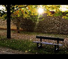 Quando il sole incontra i rami d'autunno (Immacolata Giordano) Tags: autumn light sunset sun sunlight bench nikon tramonto ray branches sole autunno sunbeam luce yellowleaves udine panchina raggio villamanin d5000 fogliegialle passarianodicodroipo