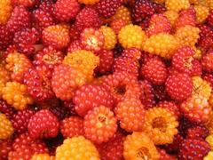 2007 Salmonberry harvest