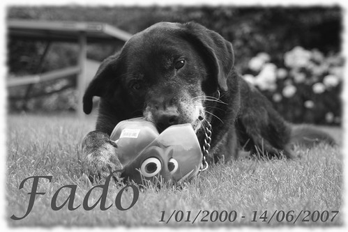 Fado 1/01/2000 - 14/06/2007