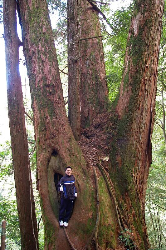 IMGP7806_這個比例可以看出神木是多麼的巨大