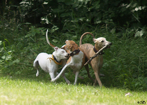 Fee and Whippets
