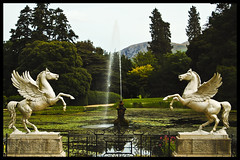 Winged Horses - by Ivan JRG