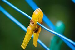 Klesklype (mortenjohs) Tags: blue detail macro green yellow norway rusty solveig clothespins d80 klesklype