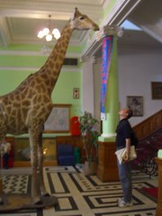 durban natural history museum - giraffe and me