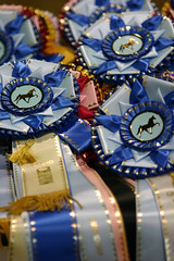 Winning ribbons