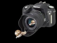 Take a picture of me! (Eisgräfin (very busy)) Tags: camera snail schnecke mywinners abigfave anawesomeshot eisgräfin oscarontour