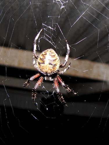 Spider on our porch