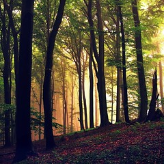 DreamingForest (BphotoR) Tags: trees light leaves forest germany deutschland licht twilight hessen dream powershot dreaming dedicated wald odenwald trau
