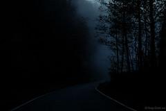 Down in the fog (Vincenzo Giordano) Tags: road trees white black fog alberi dark nikon strada 1855 nikkor nebbia bianco nero d40 vincenzogiordano