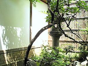 小巧雅致的內庭。但難道不會有蚊子嗎?