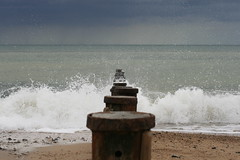 Splash3 (DavidStGr) Tags: sea breakingwave cromer