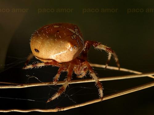 Dígaselo con arañas...
