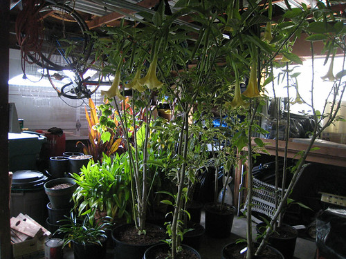 Overwinter plants in Garage