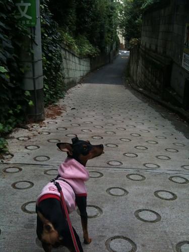 坂道を歩く黒犬(元)