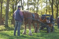 DSC_4233-200 Wilbers Valkenswaard (Ton van der Weerden) Tags: horse de cheval pferde nederlands jos draft chevaux belge belgisch trait toertocht kaltblut attelage trekpaard aangespannen zugpferd trekpaarden leenderstrijp peerlings