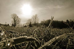 Frosted Field (Ben DeFlorio) Tags: trees sun field grass vermont frost sharon groundlevel vt pomfret canong9