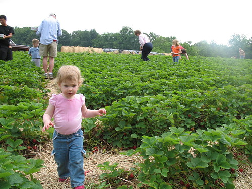 Picking Strawberries 1