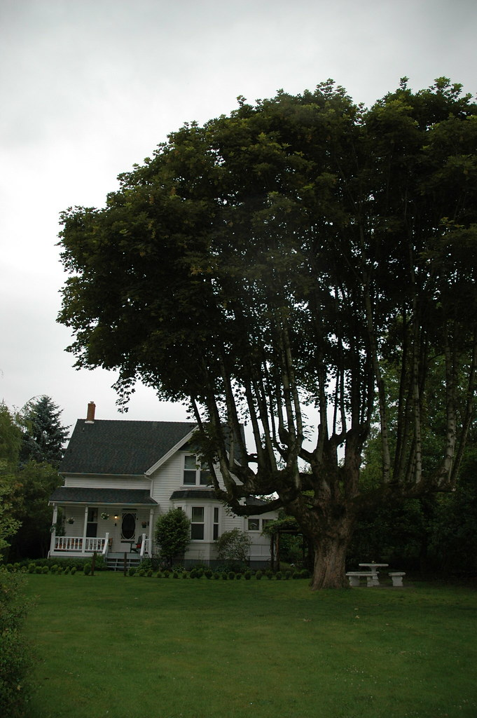 Gwynne Vaughan house from a distance
