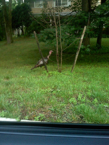 Turkey Crossing Street