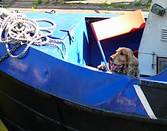 We're going down! (sbuliani) Tags: blue dog london animal lumix boat lock camden panasonic stefano dmcfz50 impressedbeauty buliani stefanobuliani